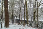 New Snowfall along Millers River, near Bearsden Forest Conservation Area, Athol, MA