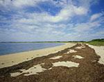 Shoreline near Five Fingered Point, Coatue Wildlife Refuge