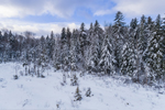 Snow-covered Spruce Trees in Winter at Edge of Billings Pond, Green Mountain National Forest, Woodford, VT