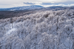 Green Mountain National Forest in Winter after Ice Storm, Mount Snow in Distance, View from Stratton, VT