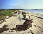 Shoreline of Nantucket Harbor at Coatue Wildlife Refuge