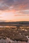 Sunrise at Thousand Acre Swamp, Phillipston, MA