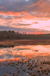 Sunrise at Thousand Acre Swamp, Phillipston, MA