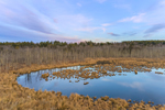 Late Evening Light at Thousand Acre Swamp, Phillipston, MA