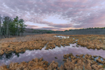 Thousand Acre Swamp at Sunrise, Phillipston, MA
