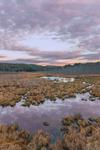 Thousand Acre Swamp at Sunrise, Phillipston, MA