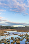 Early Morning at Thousand Acre Swamp, Phillipston, MA