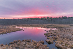 Colorful Sunrise at Thousand Acre Swamp, Phillipston, MA