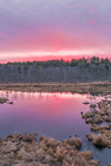 Colorful Sunrise at Thousand Acre Swamp, Phillipston, MA