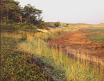 Salt Marsh Meets Pitch Pine Forest, Great Island, Cape Cod National Seashore