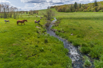 Horses and Donkeys along Bark Meadow Brook in Spring, Pomfret, CT