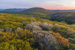 Sunset over Colorful Spring Foliage in Forests of the Litchfield Hills, Calebs Peak in Distance, Kent, CT