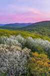 Sunset over Colorful Spring Foliage in Forests of the Litchfield Hills, Kent, CT