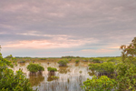 Cloudy Skies over Red Mangroves and Wetland Prairie in Early Morning, Everglades National Park, FL