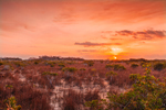 Sunrise over Red Mangroves and Wetland Prairie near Paurotis Pond, Everglades National Park, FL