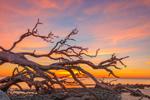 Old Snag on Driftwood Beach at Sunrise, Jekyll Island, GA