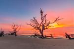 Old Snags on Driftwood Beach at Predawn, Jekyll Island, GA
