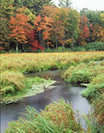 Early Fall Colors along Marsh at Lawrence Brook