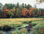 Fall Colors in Marsh and Woodlands along Lawrence Brook