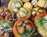 "Closeup of ""Turks Turban"" and ""Apple Dumpling"" Winter Squashes, Red Apple Farm"