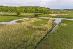 Salt Marshes at Bell's Neck Conservation Area, Cape Cod, Harwich, MA