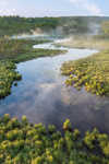 Ground Fog Rising from Thousand Acre Brook in Early Morning Light, Thousand Acre Swamp, Phillipston, MA