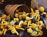 Wooden Basket and Gourds in Fall, Red Apple Farm
