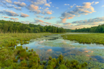 Cloud Reflections at Sunrise at Thousand Acre Swamp, Phillipston, MA