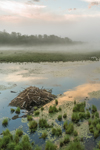 Beaver Lodge and Cloud Reflections with Early Morning Ground Fog at Thousand Acre Swamp, Phillipston, MA