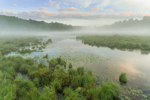Early Morning Ground Fog at Thousand Acre Swamp, Phillipston, MA