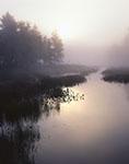 Rising Sun through Fog at Sportsman Pond