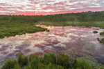 Cloud Reflections and Sunrise at Thousand Acre Swamp, Phillipston, MA