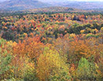 View of Fall Foliage from Overview on Hogback Mountain
