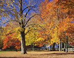 Fall Foliage on Barre Common