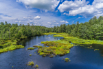 Wetlands off Millers River, Ashburnham, MA