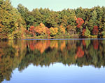 Fall Foliage Reflecting in Walden Pond, Walden Pond State Reservation