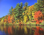 Fall Colors along Shoreline at Walden Pond, Walden Pond State Reservation