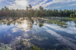 Wallace Pond in Early Morning Light, Ashburnham, MA
