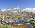 Wetlands in Fall at Great Meadows National Wildlife Refuge