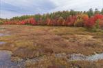 Marshes at Edge of Hopkinton-Everett Reservoir in Fall, Hopkinton, NH