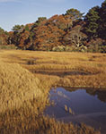 Salt Marsh and Woodlands in Late Fall