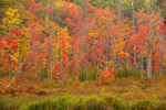 Colorful Forests at Wetlands Edge along Stanley Brook in Fall, Dublin, NH