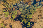 Abstract View of Marsh at Converse Meadow Pond, Rindge, NH