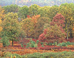 Fall Foliage in the Woods of Quabbin Park, Quabbin Reservation
