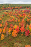 Colorful Foliage along Priest Brook in Fall, Royalston, MA