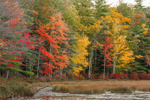 Colorful Fall Foliage along Edge of Harvard Pond, Petersham, MA