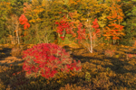 Colorful Fall Foliage at Harvard Pond, Petersham, MA