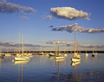 Late Evening Light Shines on Sailboats in Vineyard Haven Harbor