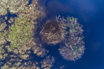 Aerial View of Beaver Lodge with Winter Cache, Royaslton Eagle Reserve, Royalston, MA