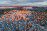 Early Morning Light Shines on Bearsden Forest Conservation Area after Fresh Snowfall, Athol, MA